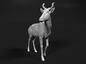 Bubal Hartebeest 1:22 Walking Male in White Natural Versatile Plastic