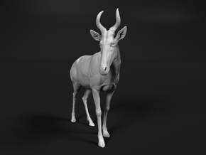 Western hartebeest 1:35 Standing Male in White Natural Versatile Plastic