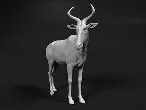 Swayne's Hartebeest 1:9 Standing Male in White Natural Versatile Plastic