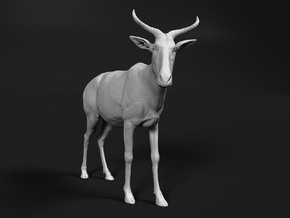 Tora Hartebeest 1:9 Standing Male in White Natural Versatile Plastic