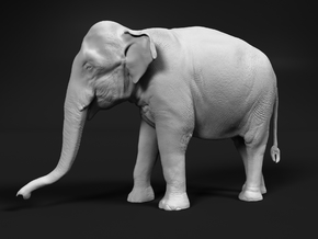 Indian Elephant 1:32 Standing Female 1 in White Natural Versatile Plastic