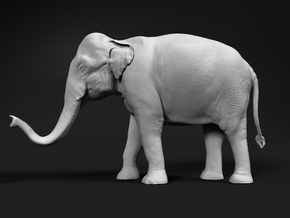 Indian Elephant 1:22 Standing Female 2 in White Natural Versatile Plastic