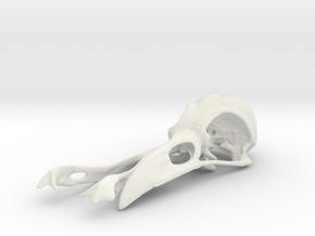Crow Skull in White Natural Versatile Plastic