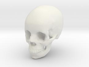 Skull From Anatomy3D  in White Natural Versatile Plastic