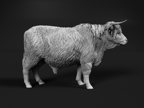 Highland Cattle 1:20 Standing Male in White Natural Versatile Plastic