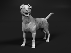 Jack Russell Terrier 1:25 Standing Male in White Natural Versatile Plastic