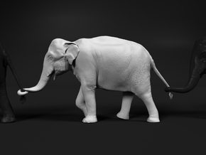 Indian Elephant 1:120 Female walking in a line 2 in Smooth Fine Detail Plastic