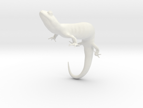 Salamander 6.4cm in White Natural Versatile Plastic
