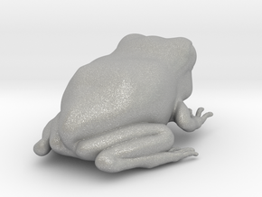 Eastern Gray Tree Frog in Aluminum