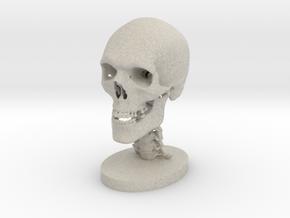 1/4 Scale Human Skull in Sandstone
