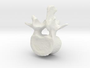 L2 lumbar vertebral body in White Natural Versatile Plastic