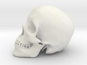 Detailed Human Skull (Life sized) in White Natural Versatile Plastic