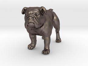 Bulldog S Full Color Sandstone in Polished Bronzed Silver Steel