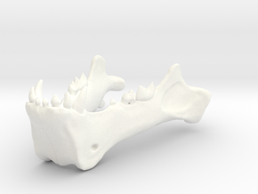 Homotherium skull, mandible in White Processed Versatile Plastic