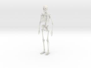 Skeleton in White Strong & Flexible