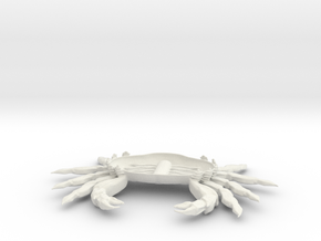crab ventral in White Natural Versatile Plastic