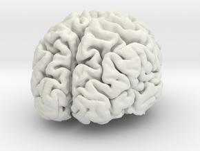 Brain replica full scale from MRI scan in White Natural Versatile Plastic
