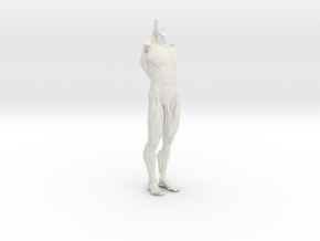 Anatomy Body in White Strong & Flexible