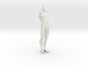 Anatomy Body in White Natural Versatile Plastic