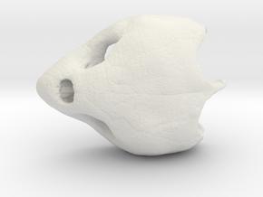 Loggerhead Sea Turtle Skull in White Natural Versatile Plastic