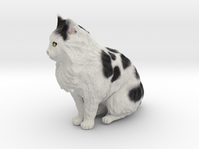 Custom Cat Figurine - Earl in Full Color Sandstone