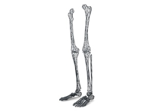 Life Size Poly Legs and Feet - Skeleton in White Strong & Flexible