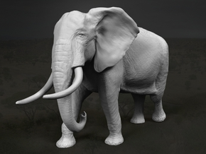 African Bush Elephant 1:12 Walking Male in White Strong & Flexible