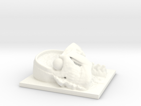 Human Head Section in White Processed Versatile Plastic