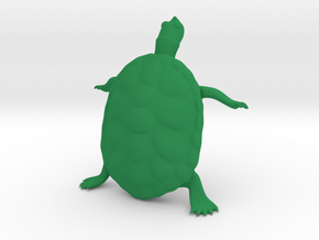 The Wondering Turtle in Green Processed Versatile Plastic