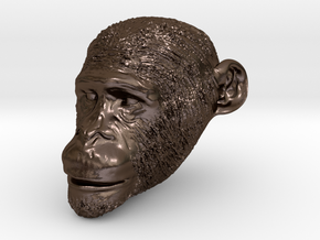 Head Chimp in Polished Bronze Steel