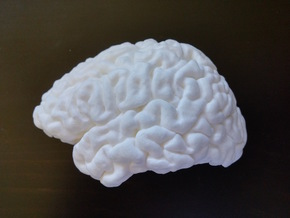 The left hemisphere of the brain - full scale in White Processed Versatile Plastic