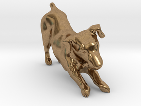 Stretching Jack Russell Terrier in Natural Brass
