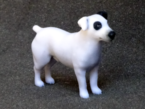 Black & White Jack Russell Terrier in Full Color Sandstone
