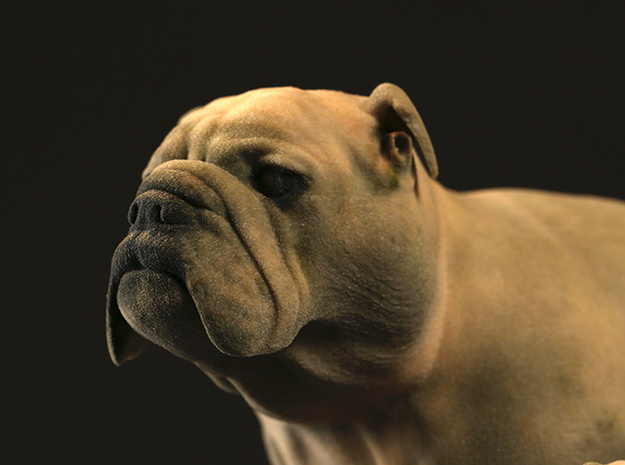 Bulldog XXL Full Color Sandstone 3d printed XXL head