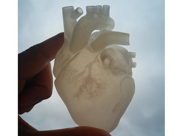 Anatomical Heart in Frosted Ultra Detail