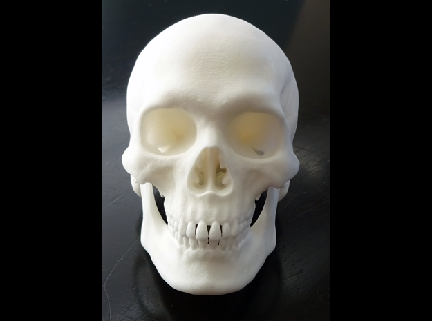Realistic Human Skull With Removable Jaw V.2.00