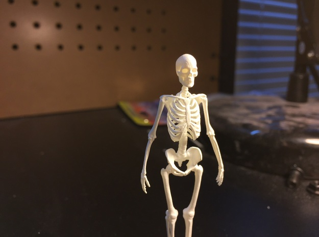 1:24 1:25 Skeleton in Frosted Ultra Detail