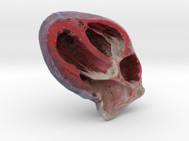 Heart - Right Half in Full Color Sandstone
