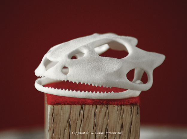 Frog Skull in White Natural Versatile Plastic