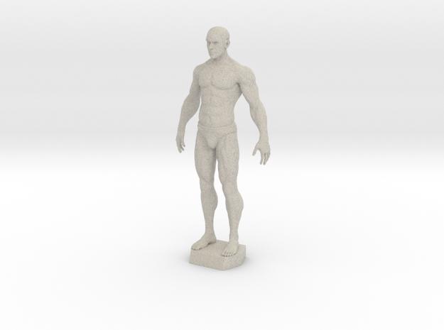 Male Anatomy Sculpture