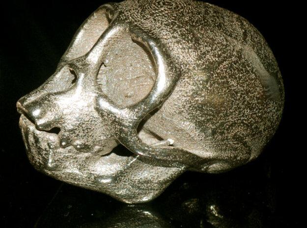 Spider Monkey Skull 75mm 3d printed Stainless steel print