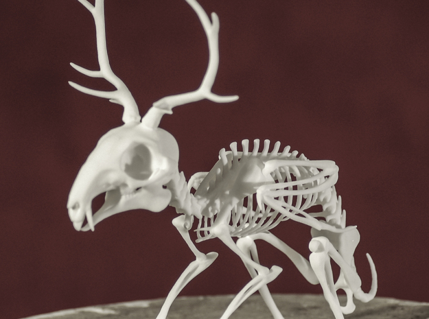 Wolpertinger Skeleton in White Natural Versatile Plastic