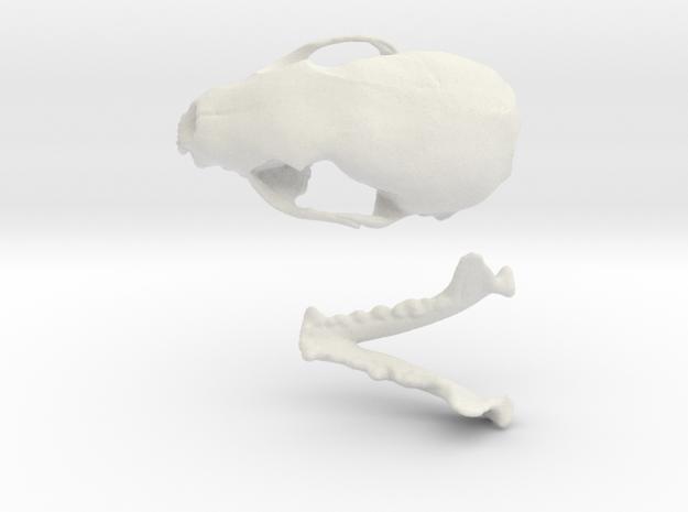 Skull of a stone marten in White Strong & Flexible
