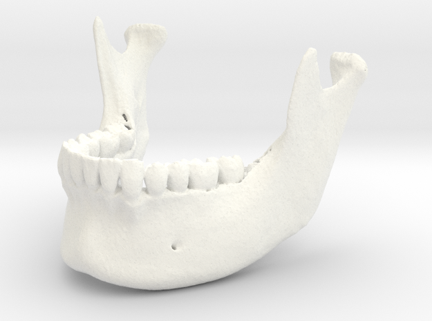 Mandible in White Strong & Flexible Polished