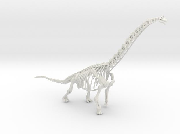 Brachiosaurus Skeleton (Large / Extra Large size)