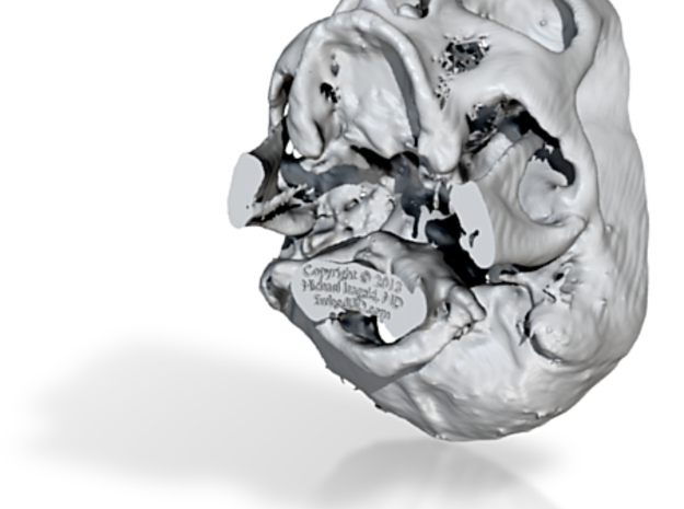 Skull base from real CT scan data, half-size 3d printed
