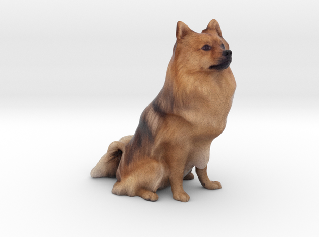 Spitz Dog 001 in Full Color Sandstone