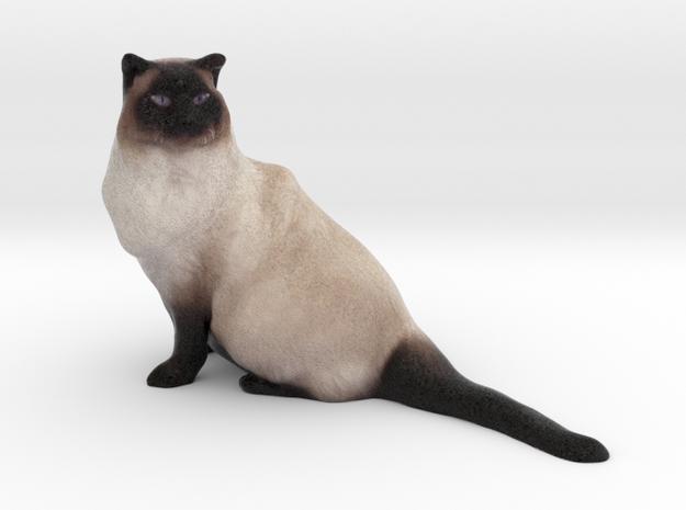 Birman Cat 001