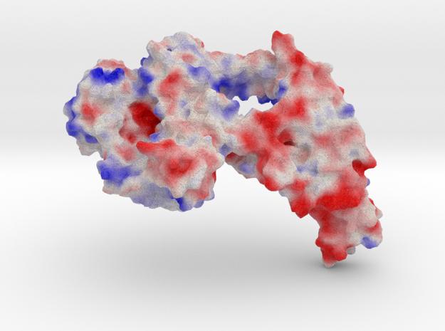 Topoisomerase III α in Full Color Sandstone