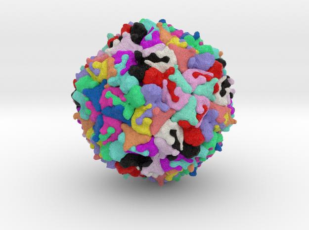 Enterovirus 71 in Full Color Sandstone